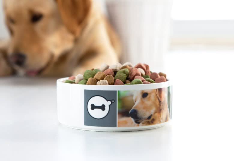 Make a Pet Bowl