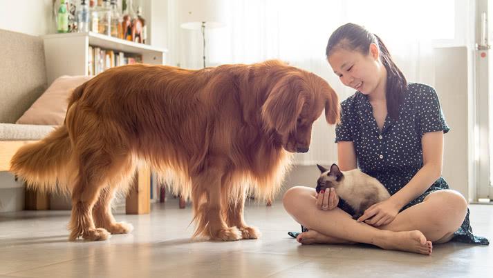 For pet parents